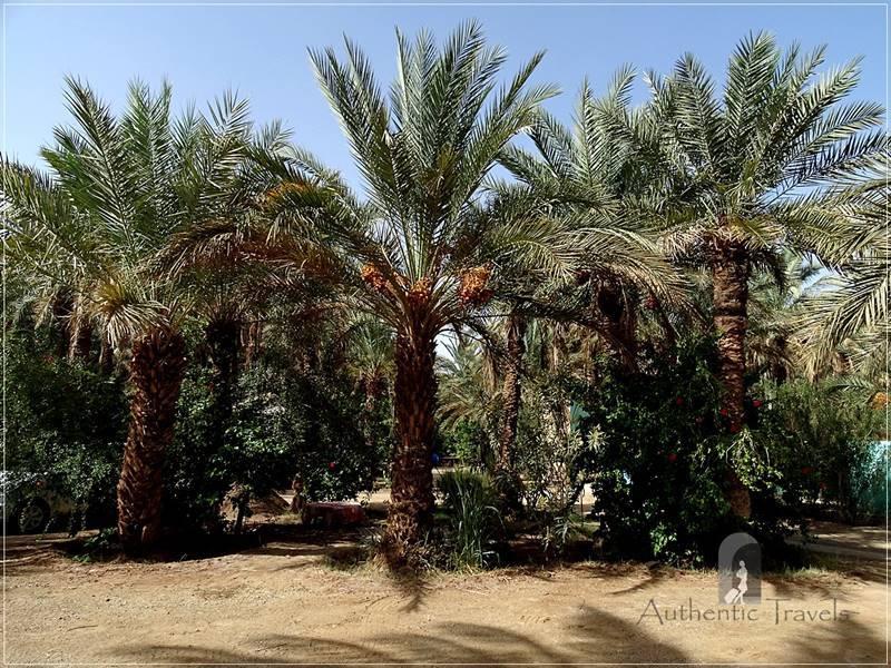 Draa Valley: Zagora - Camping Oasis Palmier