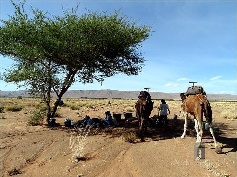 Camel Desert Trek - Day 1: lunch under the only tree in the area (fried chicken with potatoes and coca cola)