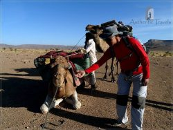 Camel Desert Trek - Day 2: my camel was waiting for me to ride it