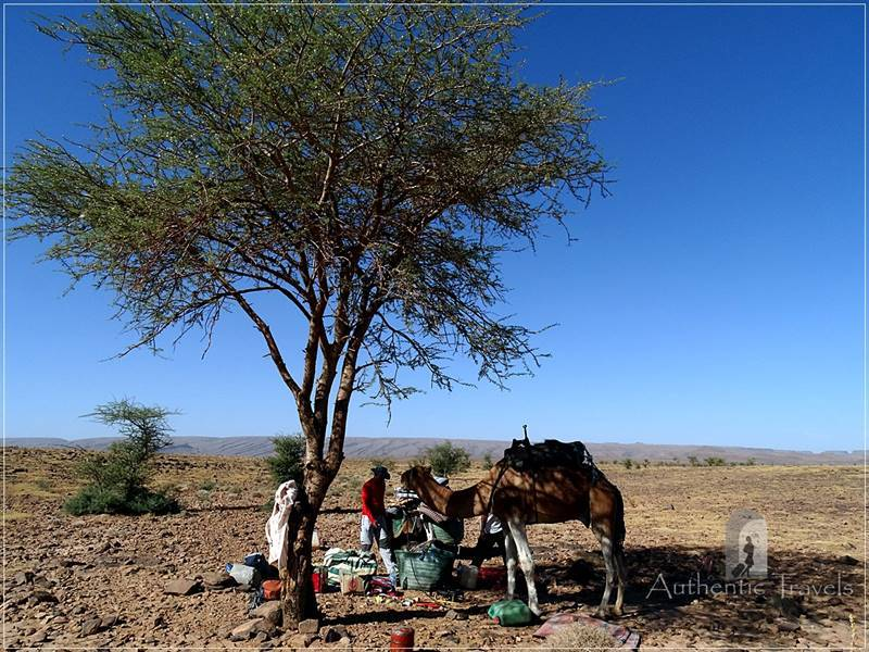 Camel Desert Trek - Day 2: late lunch time under a tree 2 h from Afrokh nomad camp