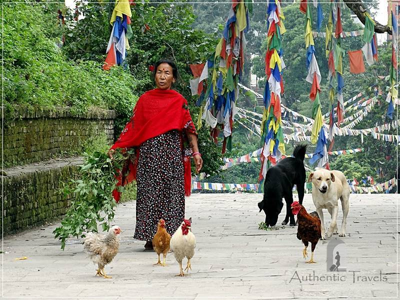 Kathmandu - Swayambhunath - woman with her chickens
