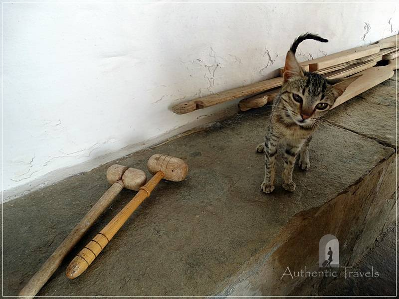 Thassos Island - Moni Karakallou: the cat is calling everybody to the prayer