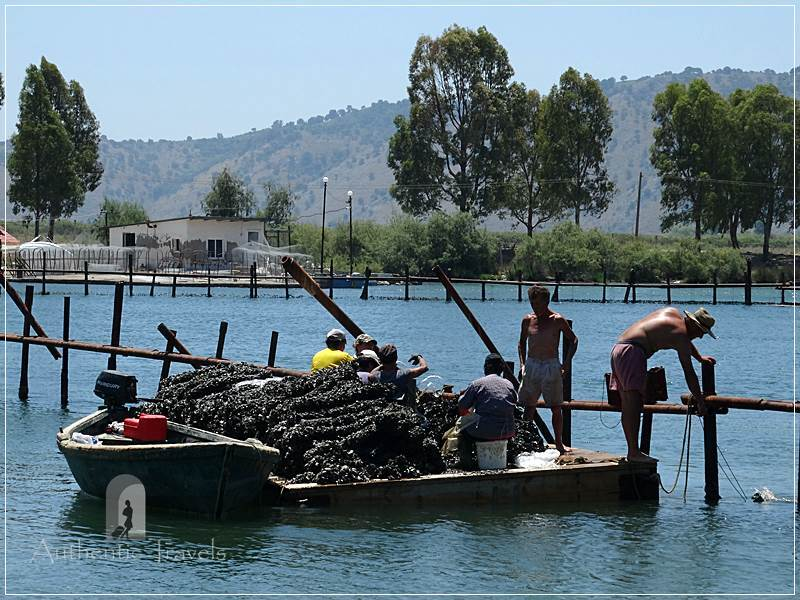 Butrint Lake - locals picking up mussels and getting them ready to sell on the market
