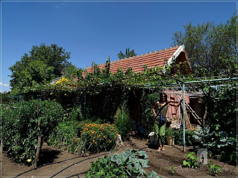 At Nate's father vegetable garden in Karposh Naselba village, near Kumanovo